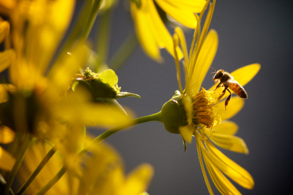 How you can help save bees