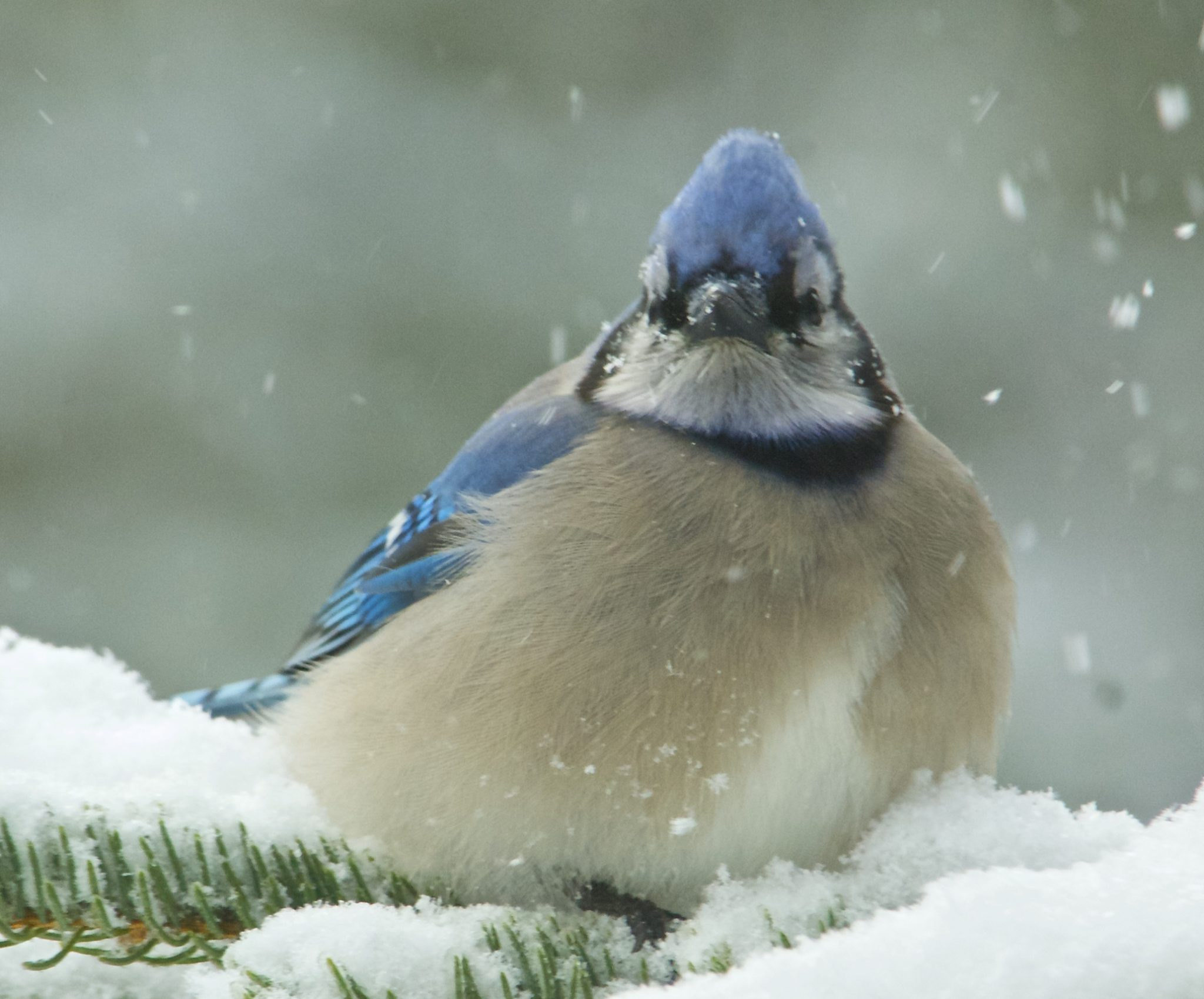 How to attract birds in the winter