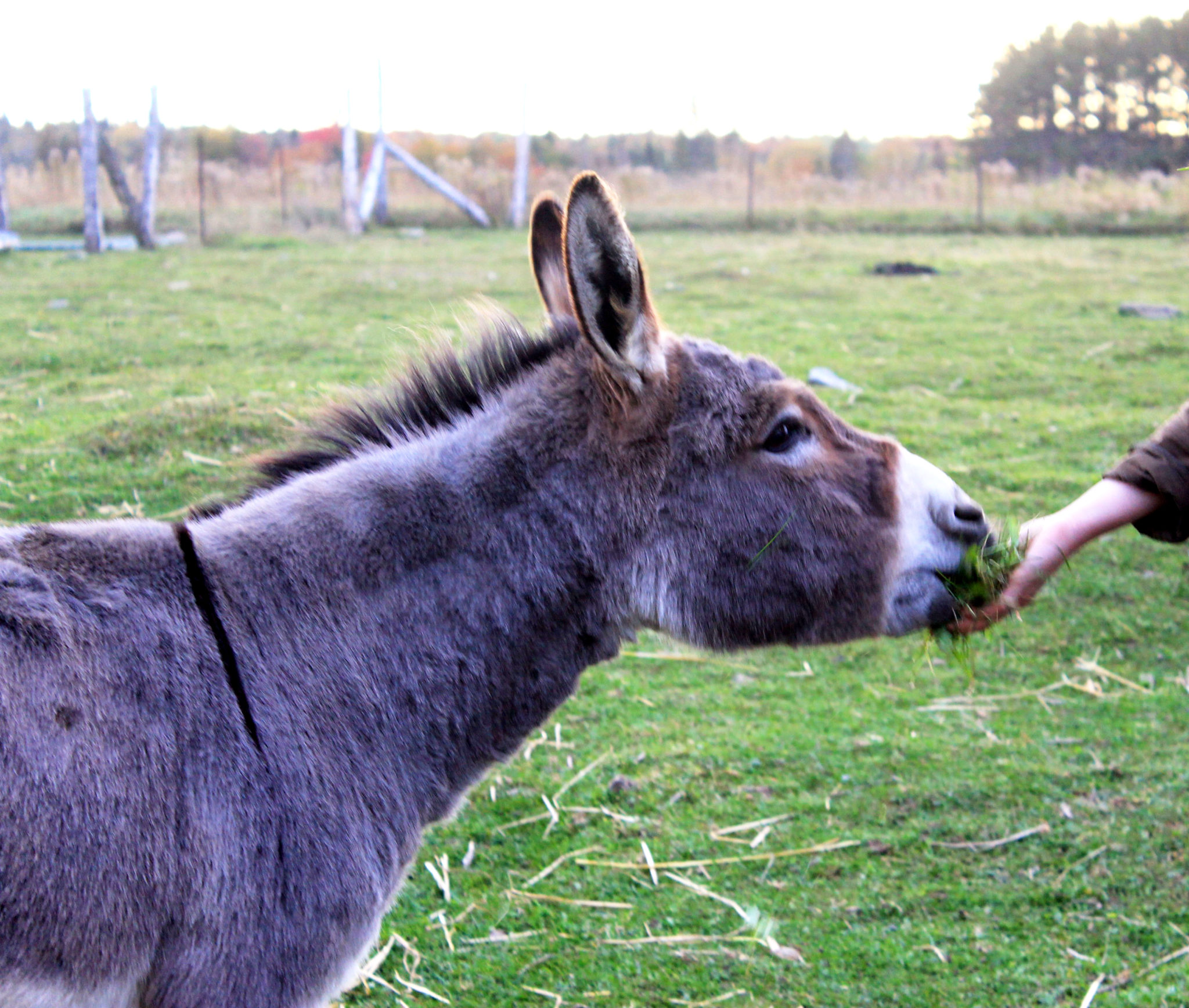 What are donkeys good for?