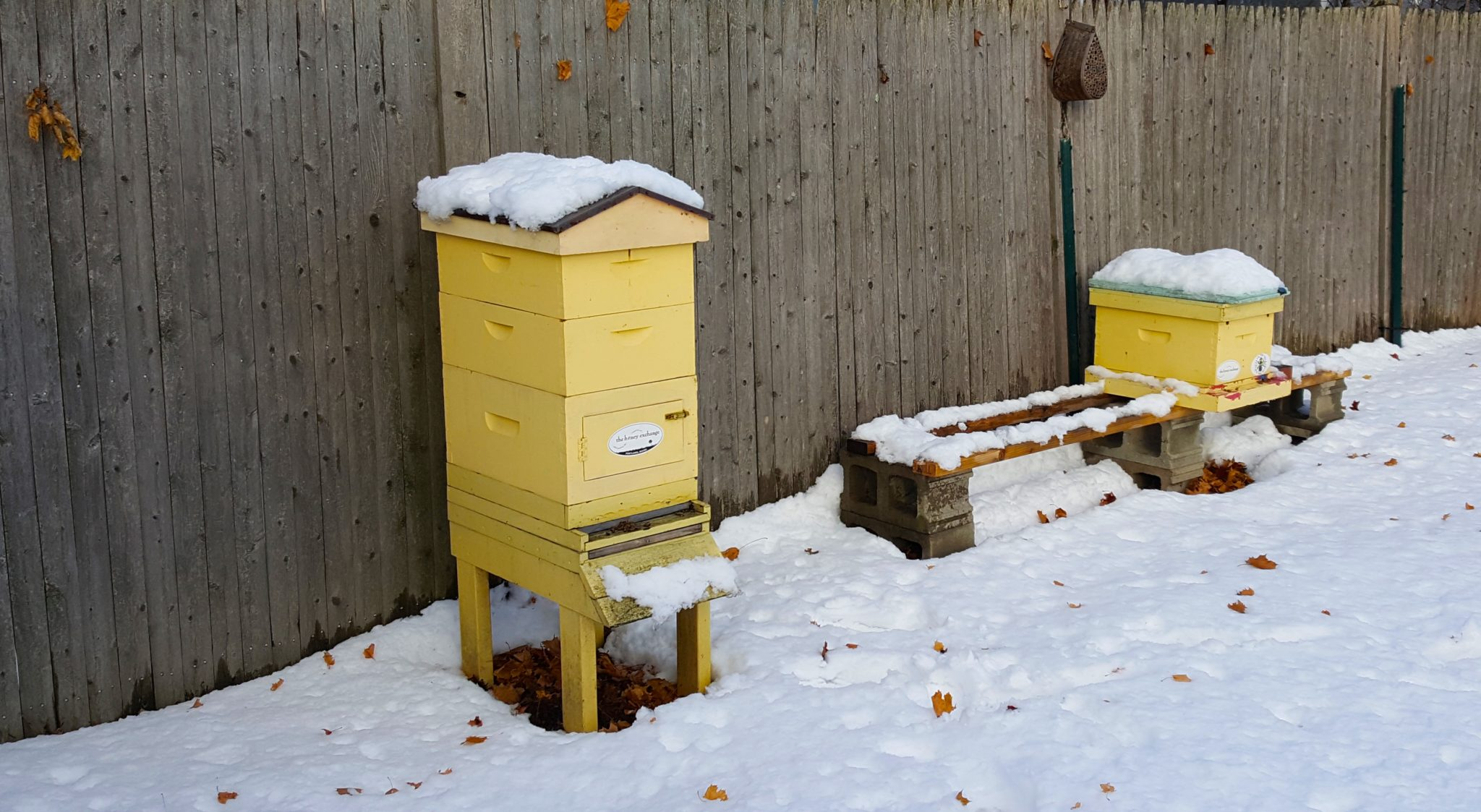 What happens to bees in winter?