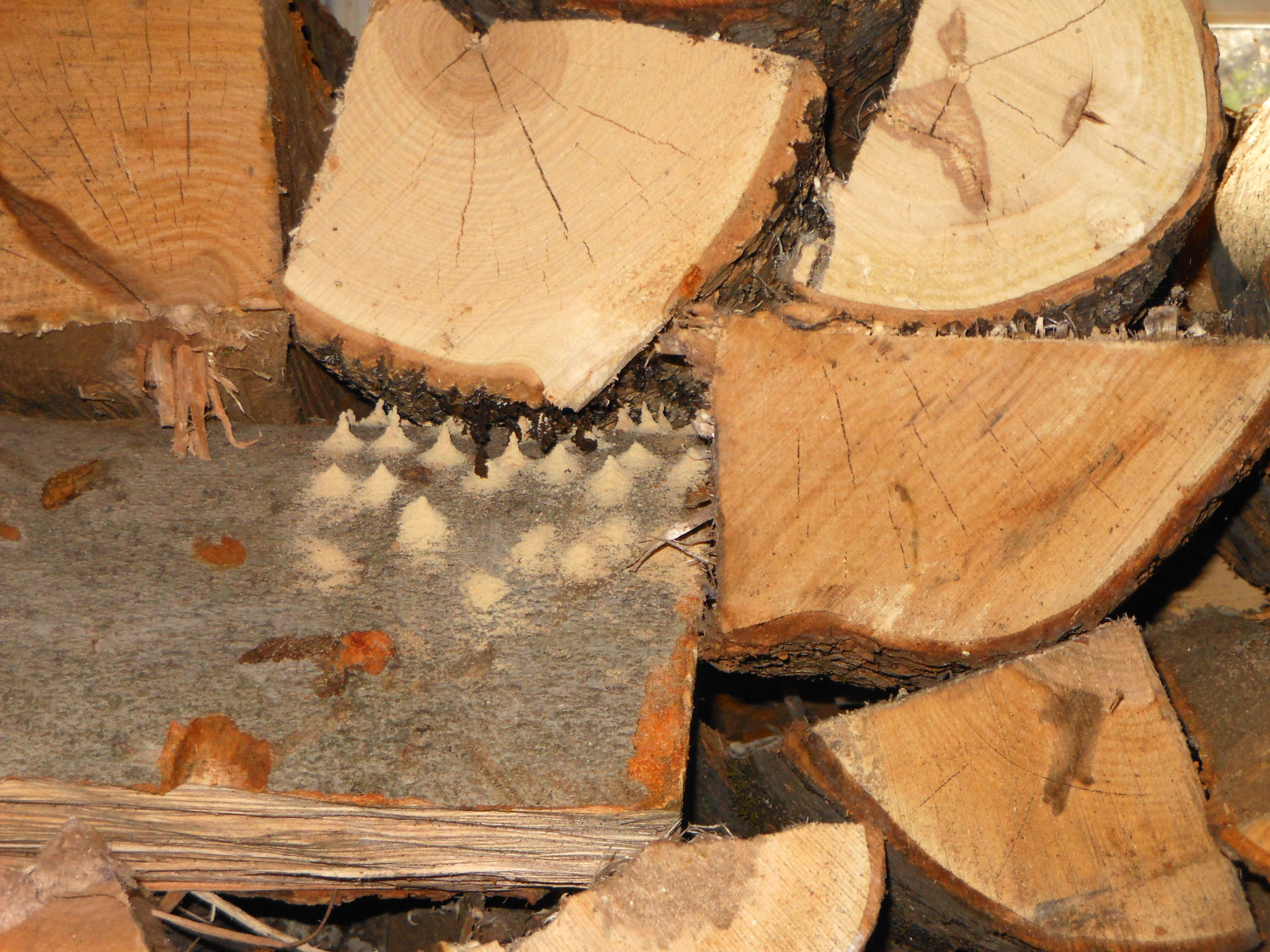 Bugs in firewood? Here's what you need to know