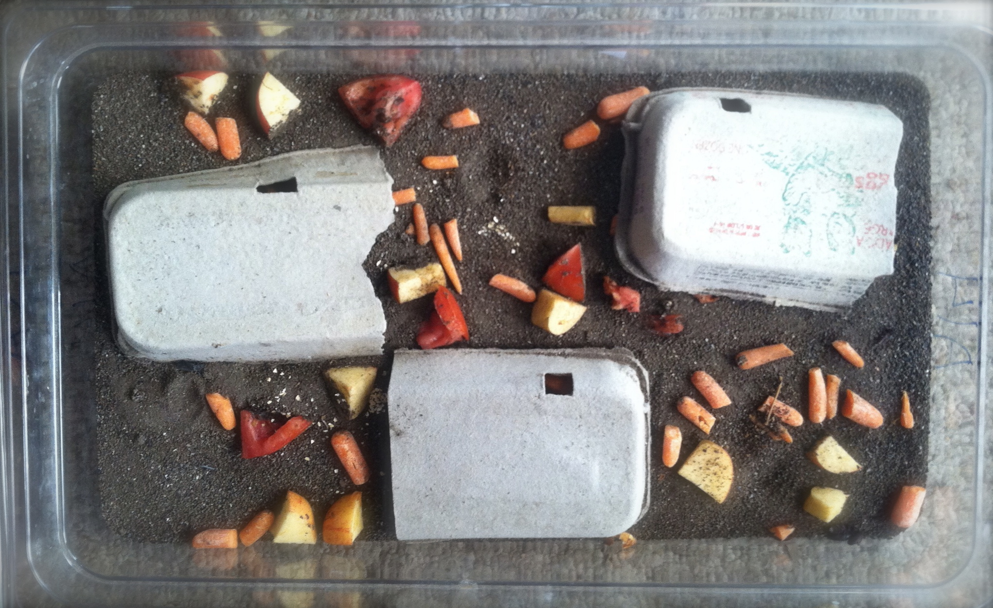 How To Start Your Own Mealworm Farm Hello Homestead