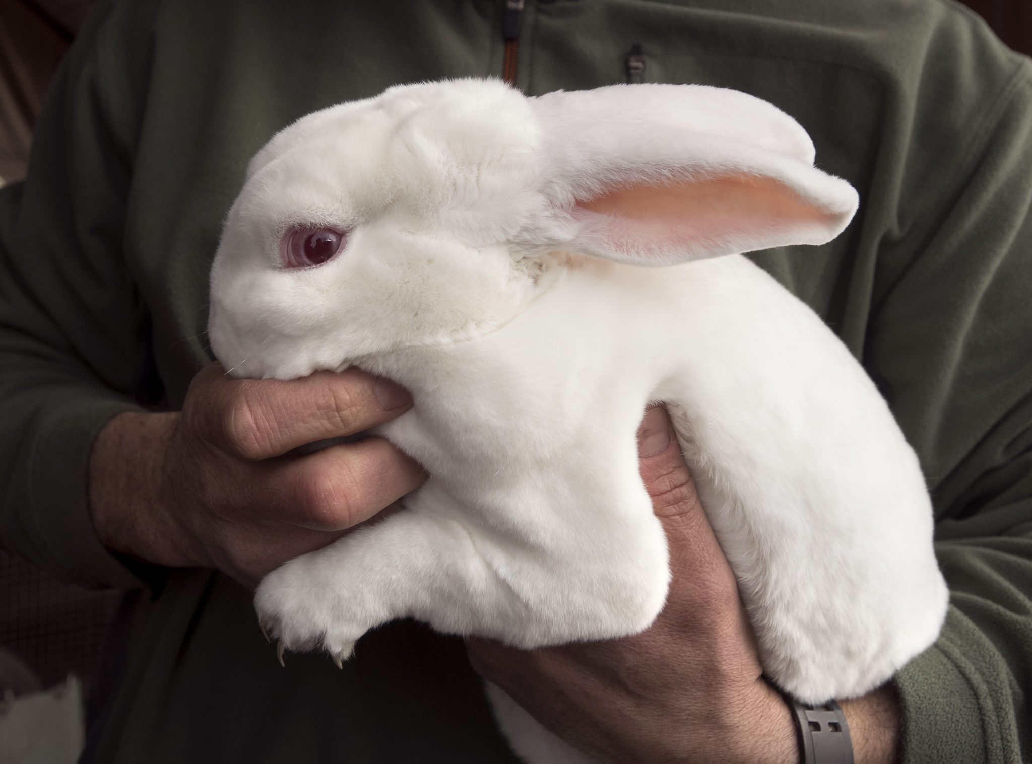 What you should know about rabbit farming   Hello Homestead