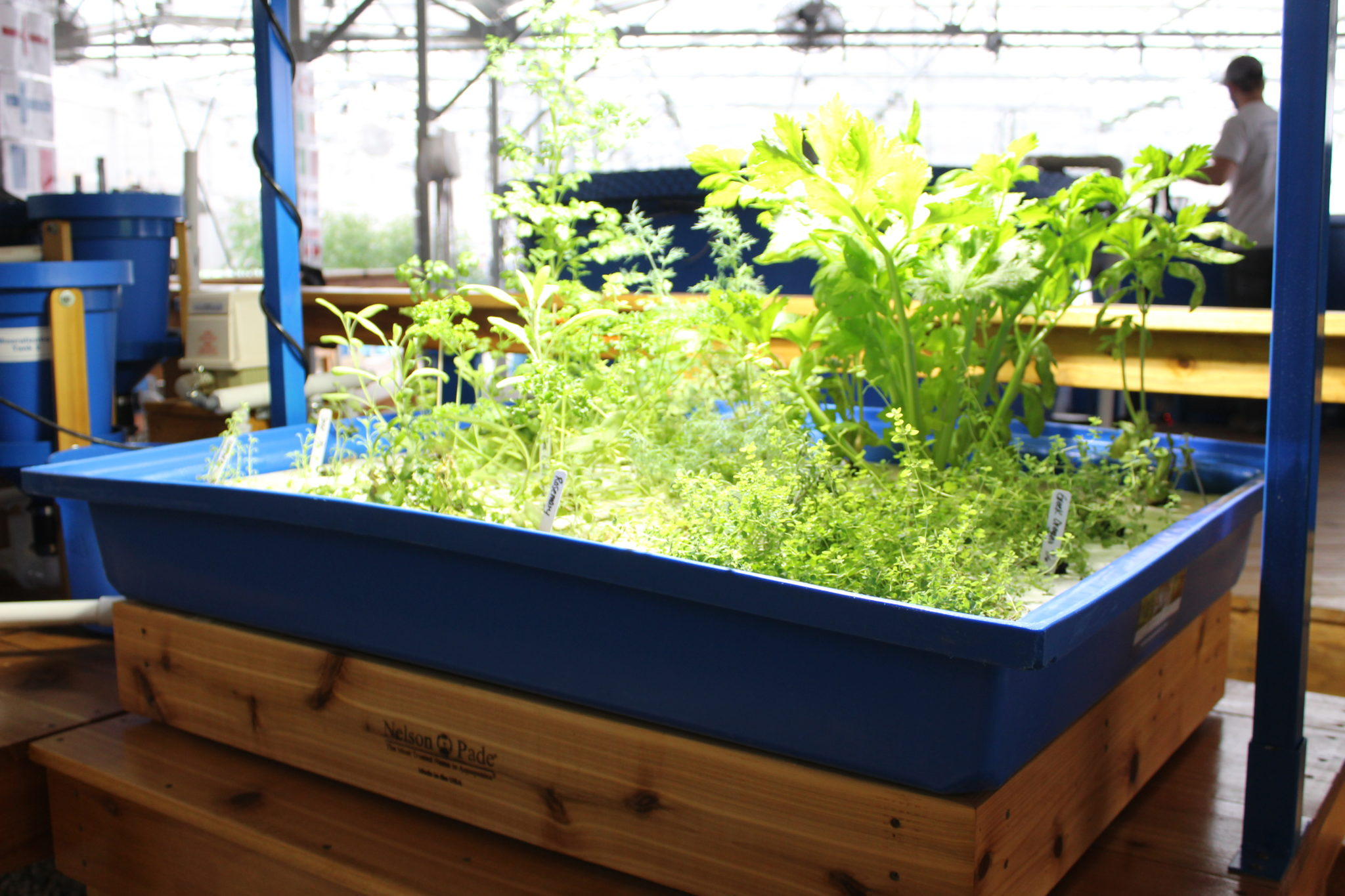 Introduction to aquaponic gardening