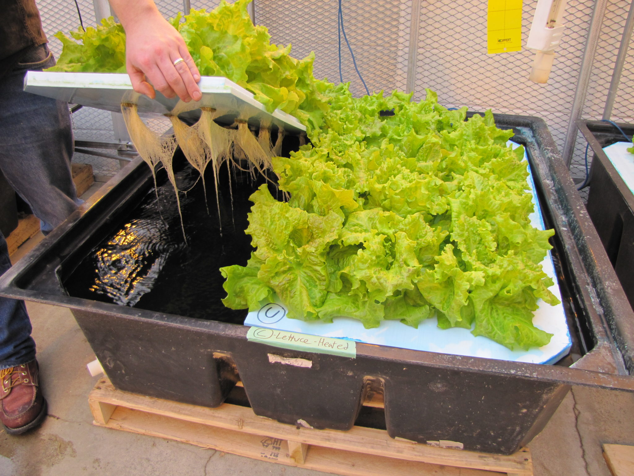 How to get started with hydroponics | Hello Homestead