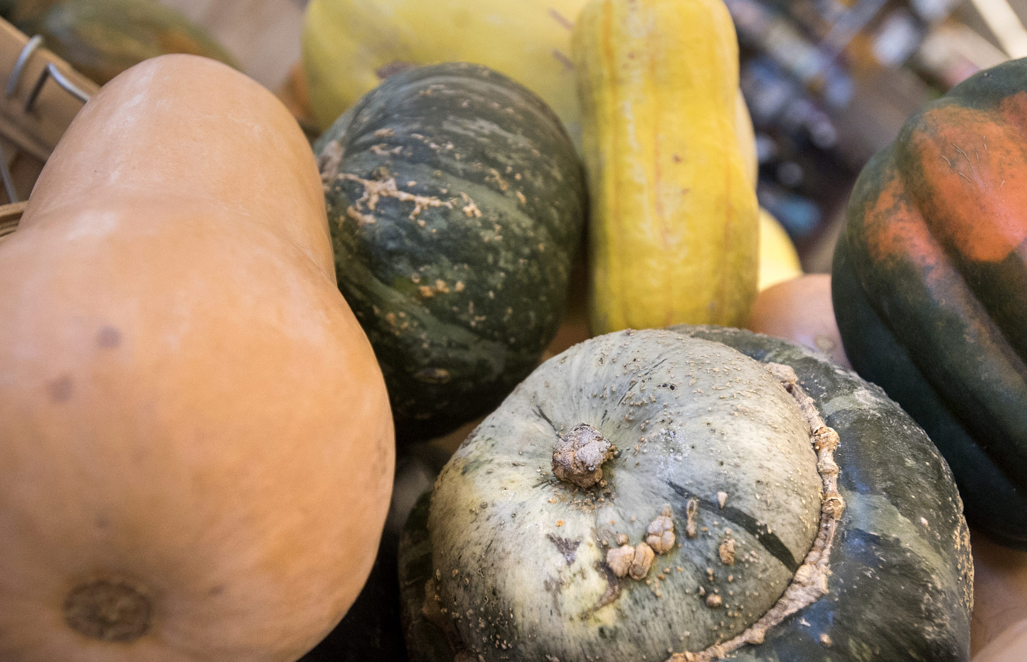A guide to winter squash (with recipes!)
