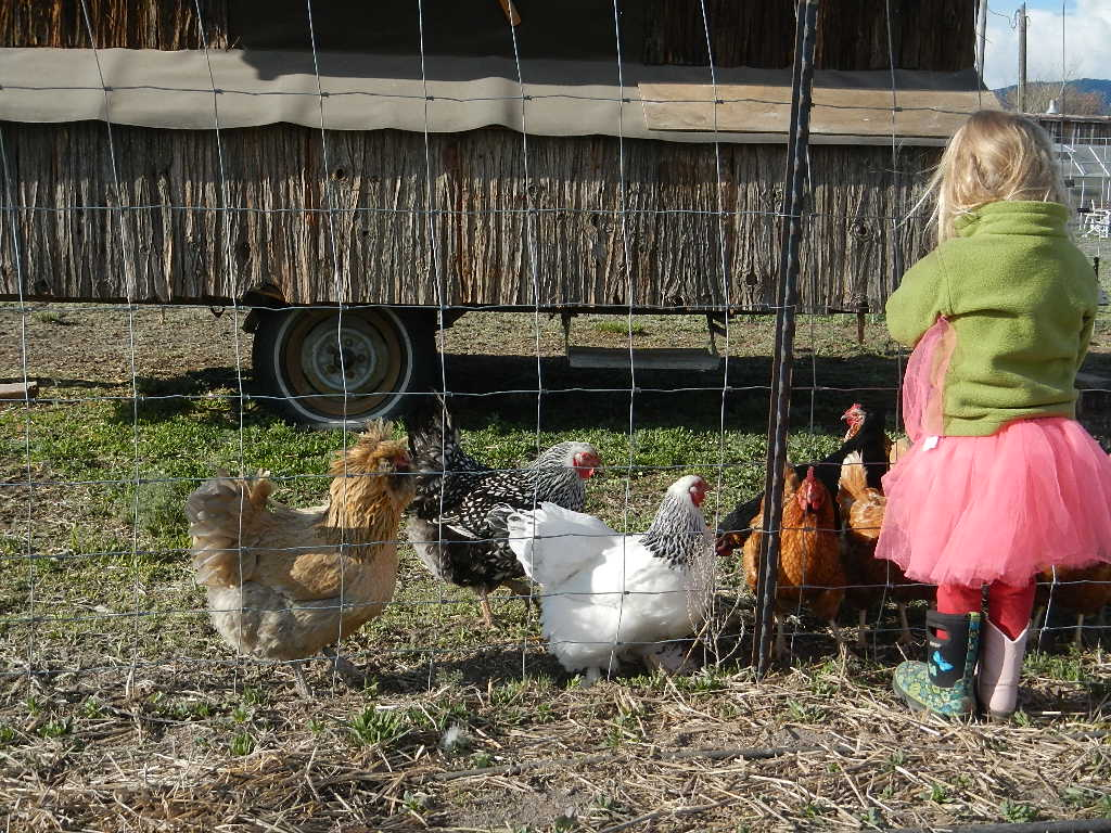 Choosing the right projects, chores for homesteading kids
