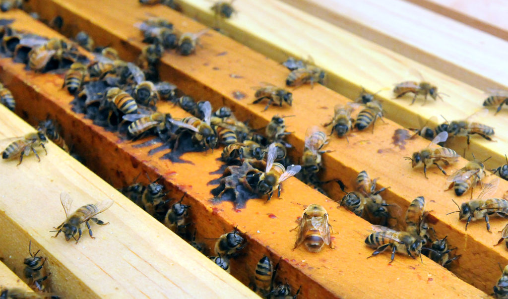 If you want to keep bees, planning ahead is key to getting started. And that starts with knowing the answer to an important question: When should you order bees?