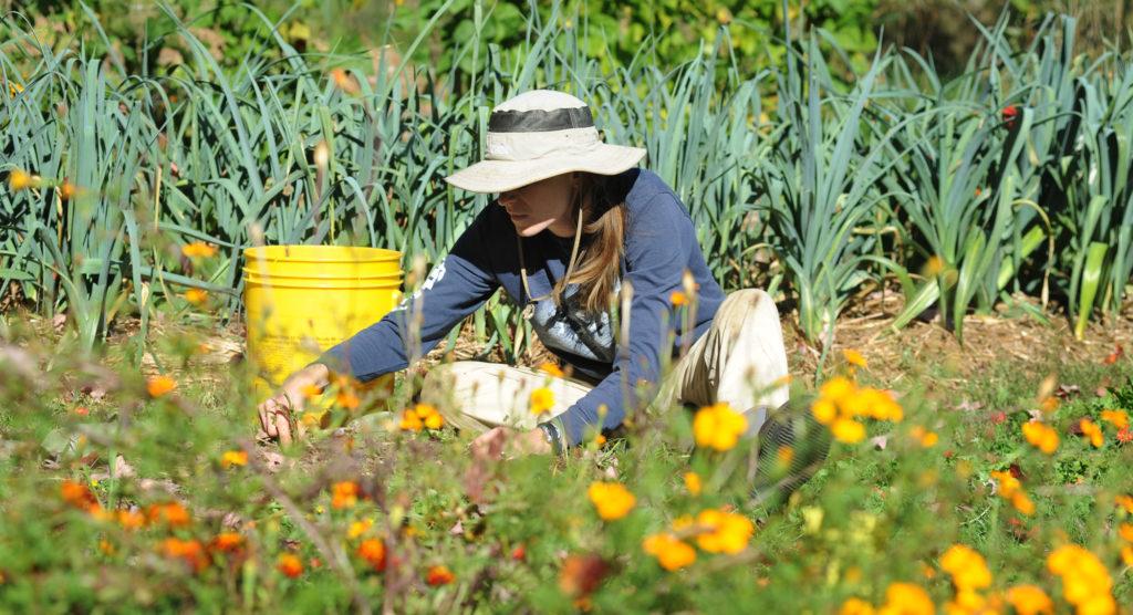 The Brains Secret Gardeners >> Planting Health Therapeutic Benefits Of Gardening Hello