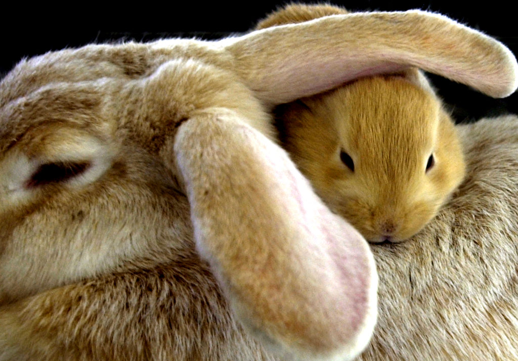 Where do rabbits live?   Hello Homestead