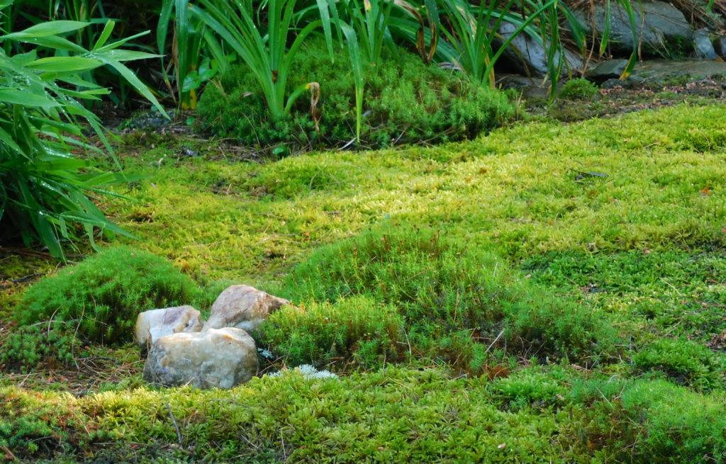 How To Grow Moss Hello Homestead