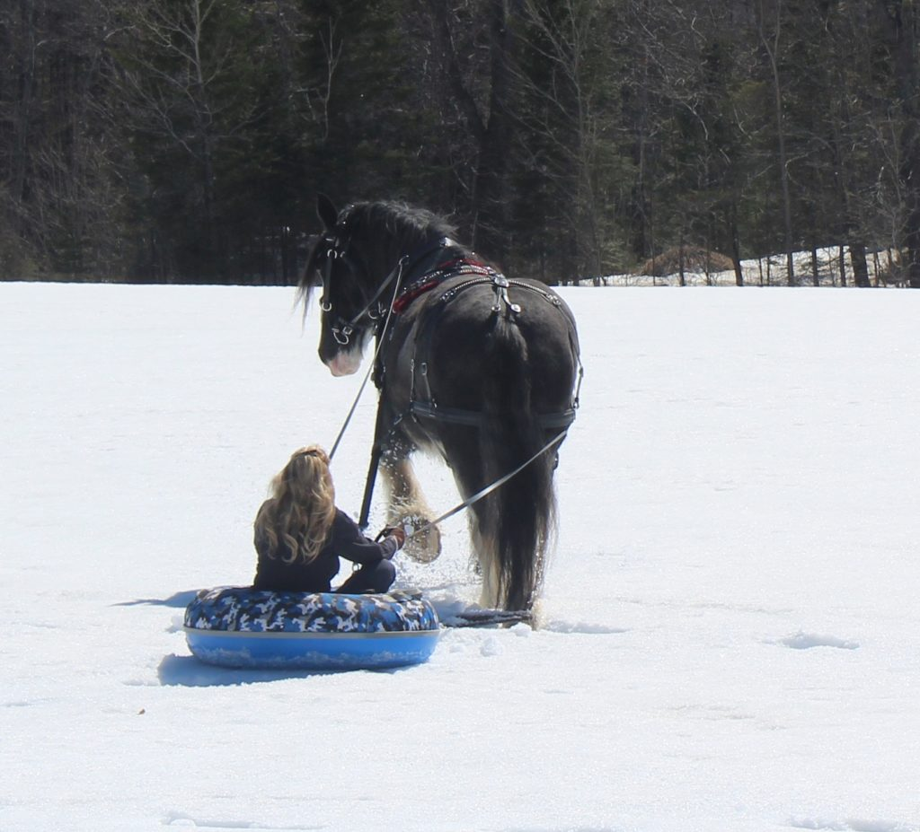 A draft horse pulls a woman on an inner tube over the snow.