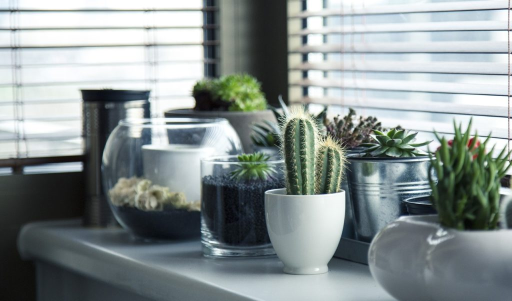 Cactuses in upcycled containers, one of 12 upcycling ideas for the home.