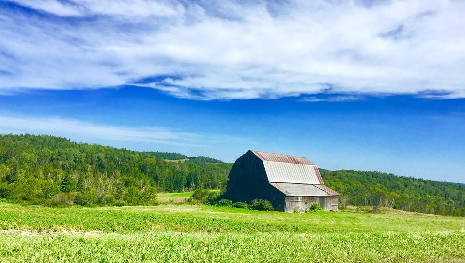 An old barn under blue skies with some fluffy clouds.