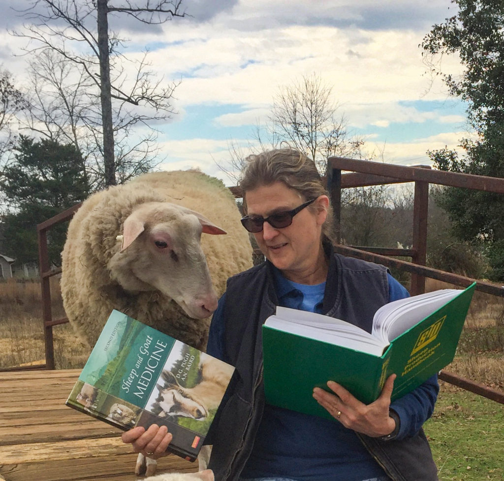 Debbie Webster, owner of Whispering Pines Farm and Dairy in South Carolina, pretends to read to one of her dairy sheep. | Photo by Maggie Webster