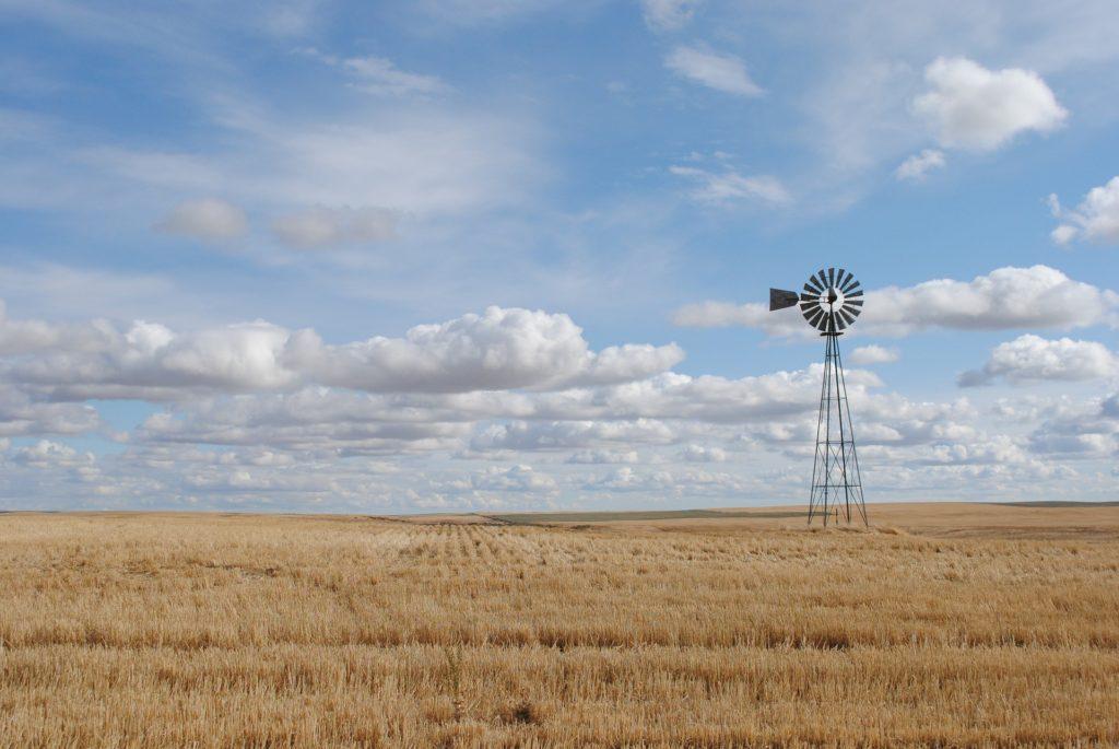 A farm wind turbine in a field of ripe grain.