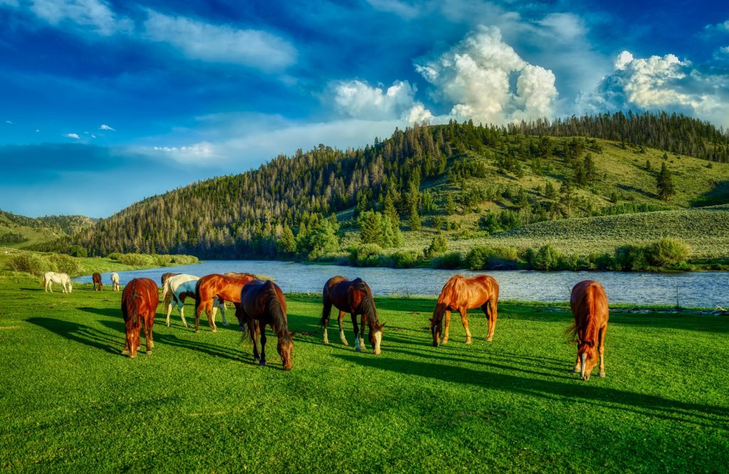 A herd of grazing horses on green grass in front of a river.