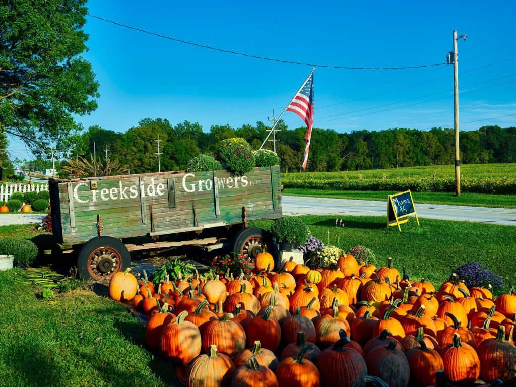 Rows of ripe, orange pumpkins in front of an old green trailer on the side of the road with an American flag.