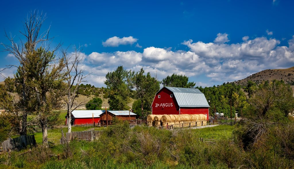 A red barn with a red outbuilding plus natural wood-sided outbuilding. Round bales of hay in front of the barn.
